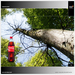 """project: """"coca-cola in the wood"""" pro-two"""